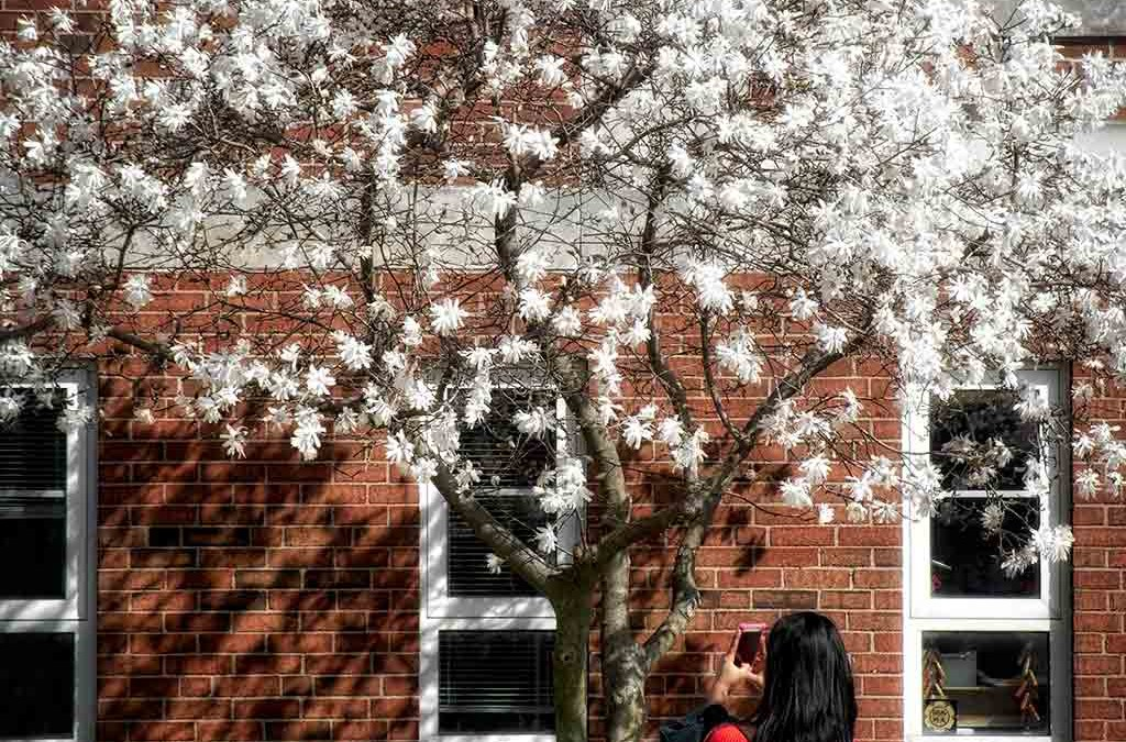 Spring views at Otterbein